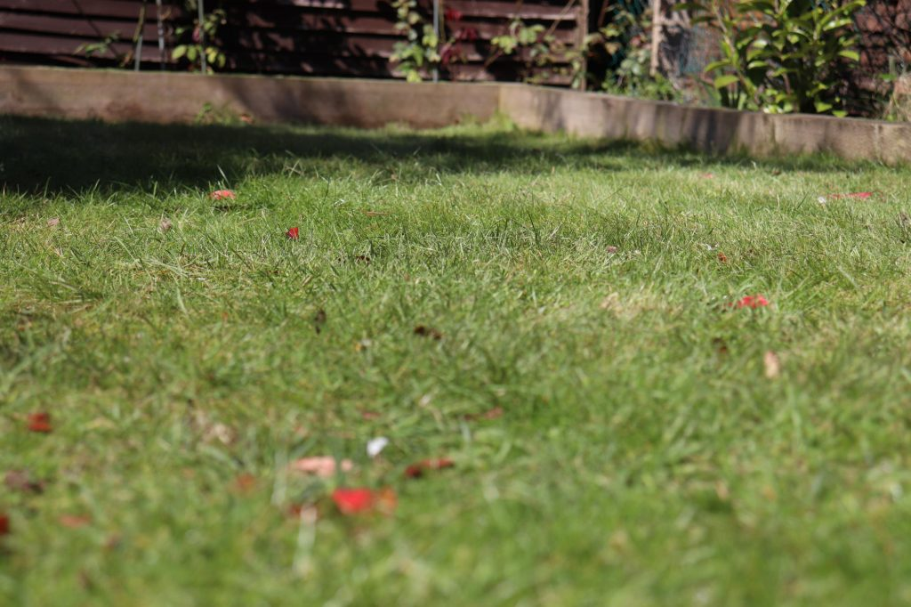 Bosch AHM 38 G Review - Lawn After